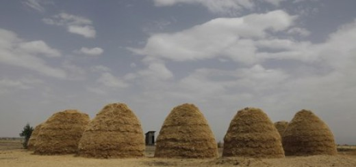 MDG : Mounds of teff grain dry in fields in Ethiopia