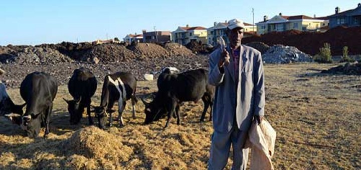 Ethiopian farmer Mulugeta Mezemir on his farmland in front of Country Club Developers properties in Addis Ababa, Ehiopia.